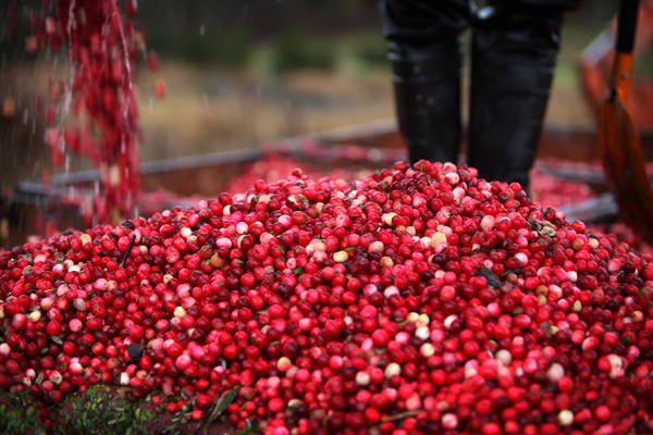 Quebec government worker dies on cranberry farm