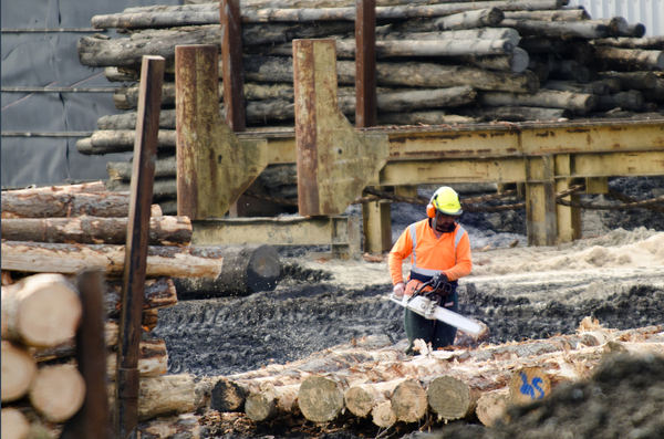 Dangers of logging, forestry not worth the risk: Report