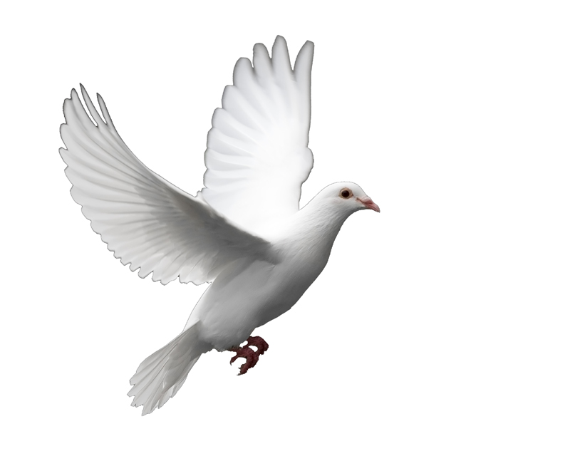 life and white dove partnership We sell over 40 varieties of the most popular doves, including ringneck doves, turtle doves, ground doves, and white doves be sure browse our terrific stock of dove supplies and make sure you have everything you need for these great doves.