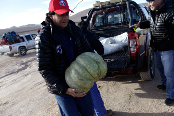 A worker from Escondida — the world's biggest copper mine — carries a pumpkin as they prepare to camp outside the company gates during a strike, in Antofagasta, Chile, on Feb. 9. REUTERS/Juan Ricardo