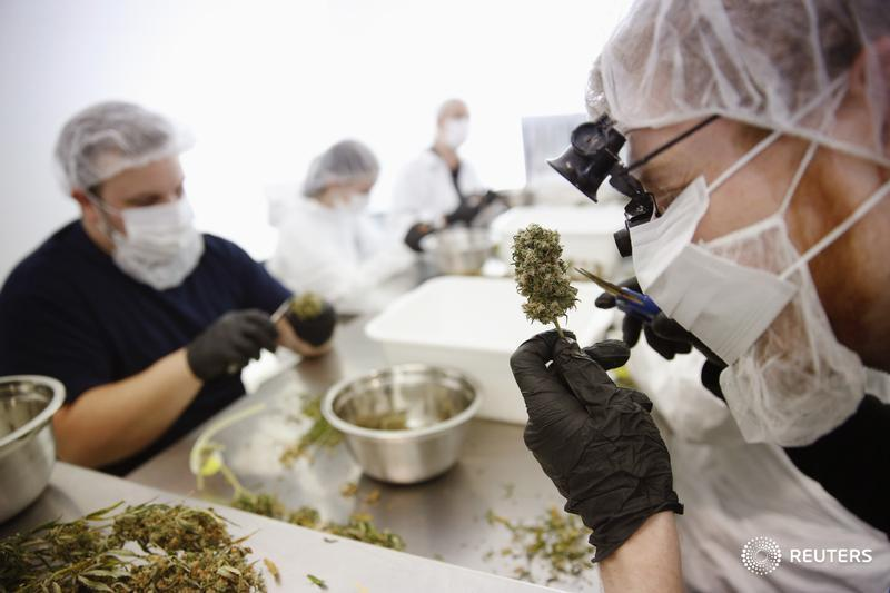 Employers need policies in place for marijuana: Workers' compensation board