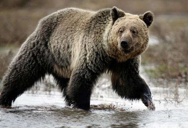 Crewman mauled, badly injured by grizzly attack in remote B.C. forest