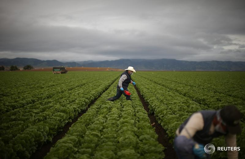 Trump reassures farmers immigration crackdown not aimed at their workers
