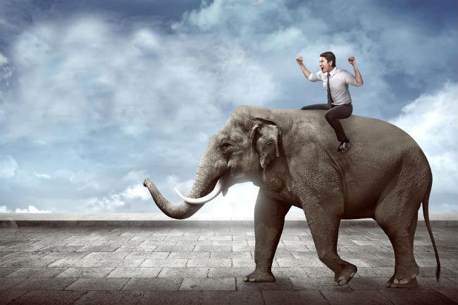 Elephant, Rider