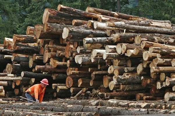 Substance abuse top health and safety risk in sawmills