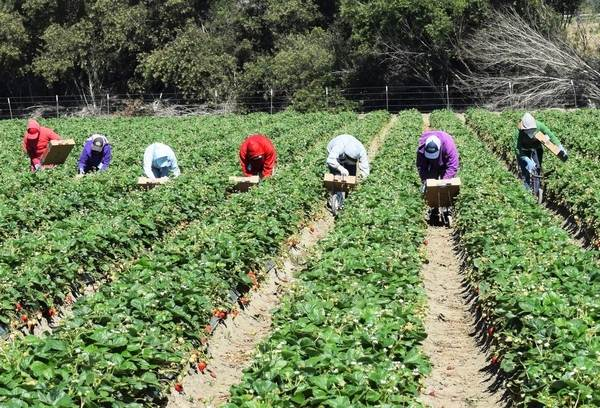 Migrant farm workers vulnerable to sexual violence