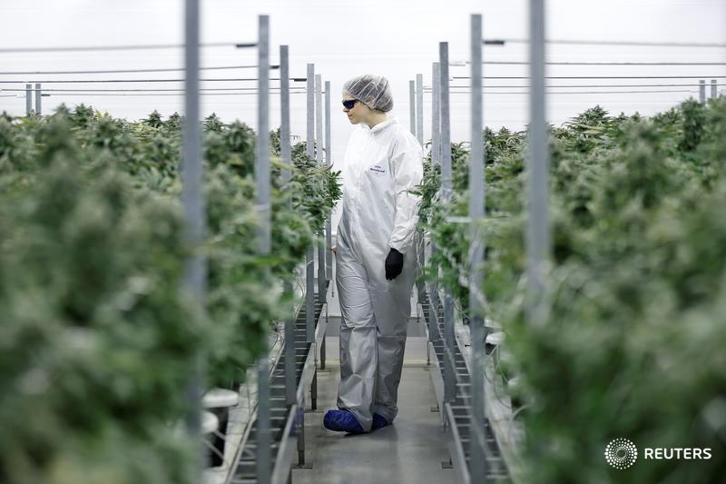 Marijuana job searches up as industry grows: Study